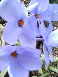 白のも青紫のも