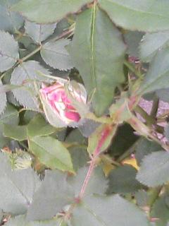 2008414_008