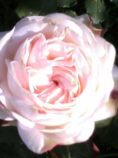 2008415_106